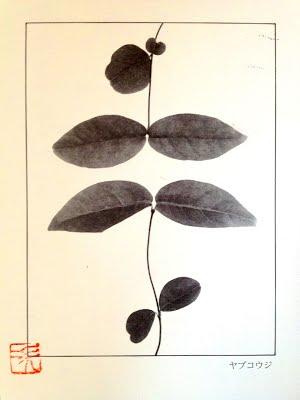 jiro-nakaya-5