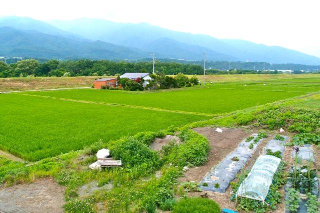 yoshio-ogasawara-9
